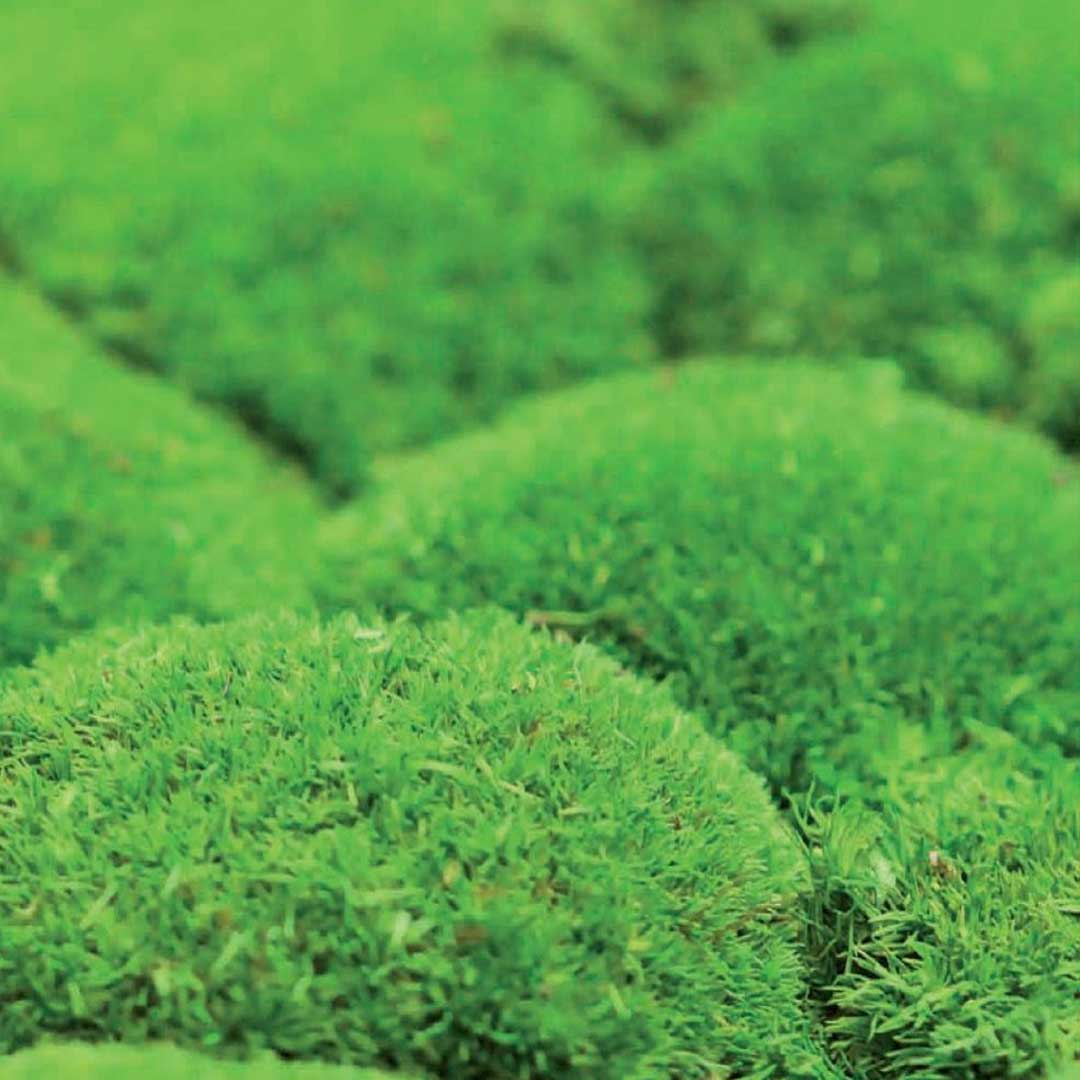 Float_Finishes_Moss_Bun-Moss-Light-Green