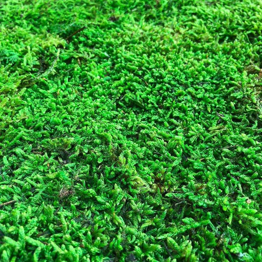 Float_Finishes_Moss_Lowland-Moss